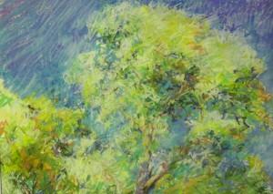 2011 37  tree pair